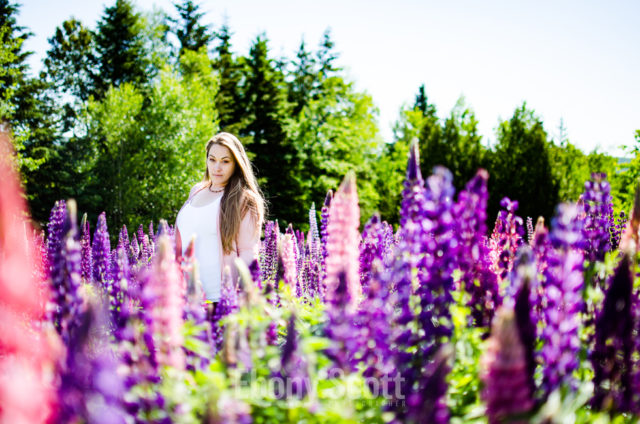 Lora in the Lupins in Woodstock NB